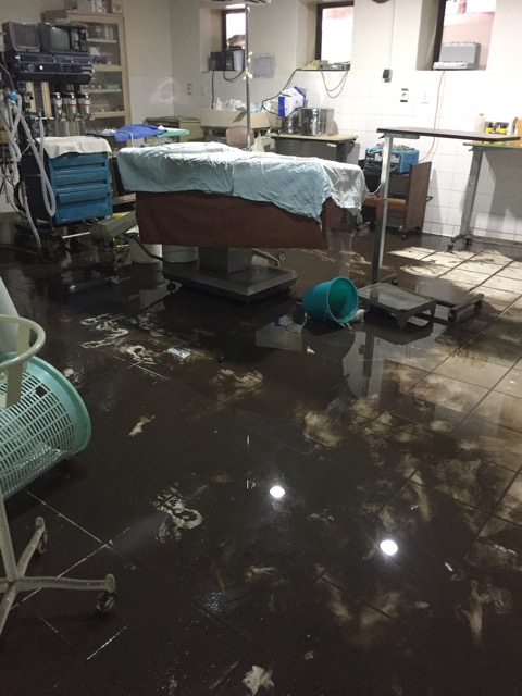 Mud in the operating theatre
